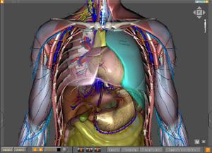 Полнота анатомии в программе